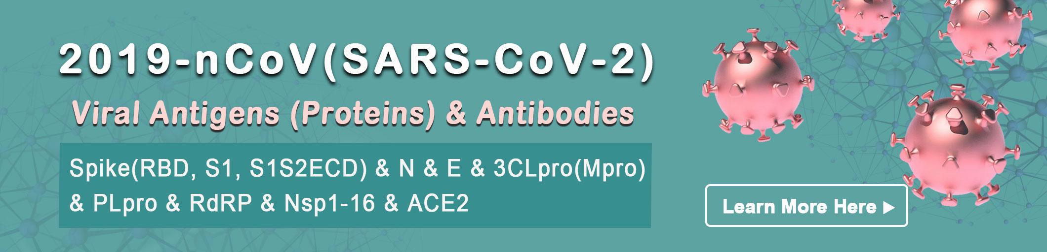 coronavirus antigen
