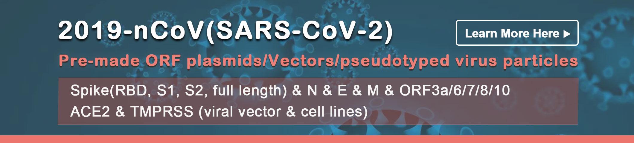Covid-19 antigen
